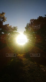 岩手の森林ロードの光の写真・画像素材[3800284]