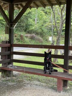 ベンチに座る犬の写真・画像素材[3870416]