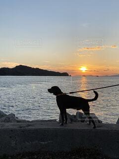 夕日と犬の写真・画像素材[3870473]