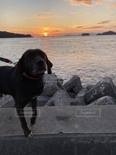 夕日と犬の写真・画像素材[3870476]