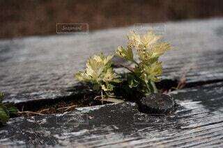 花のクローズアップの写真・画像素材[3789503]