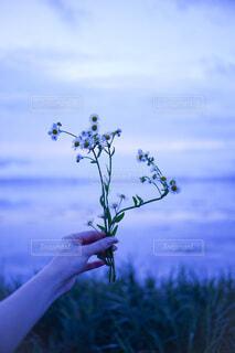 花と湖と彼女の手の写真・画像素材[3789538]