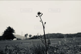 畑の真ん中にある草木の写真・画像素材[3789568]