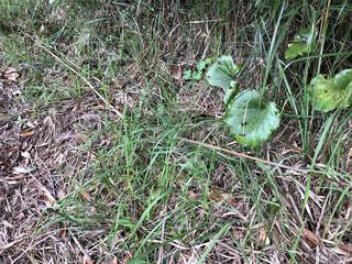 草木の中にいる生き物の写真・画像素材[3866031]
