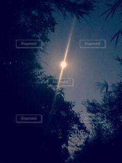 木々の隙間から見える月の写真・画像素材[3921582]
