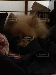 犬の写真・画像素材[161279]
