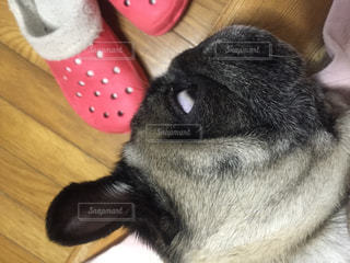 No.218838 犬