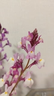 花のクローズアップの写真・画像素材[3799915]
