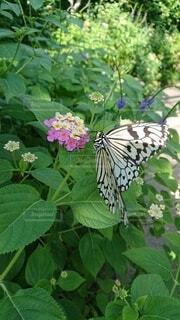 庭の植物の写真・画像素材[3801254]