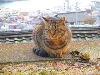 崖に座っている猫の写真・画像素材[3799451]