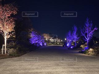 夜の広場の写真・画像素材[3885367]