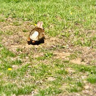 芝生の上を走るウサギの後ろ姿の写真・画像素材[4308714]