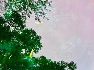 樹木が映り込む池の中で泳ぐ鯉の写真・画像素材[4631534]