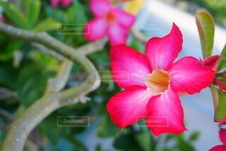 南国の花の写真・画像素材[3802273]
