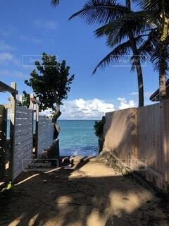 海に続く道の写真・画像素材[3806713]