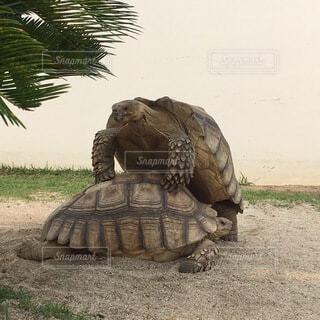 大きな爬虫類の写真・画像素材[4154910]