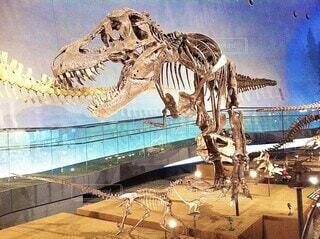 ティラノサウルスの化石、尻尾を食べますの写真・画像素材[3986908]