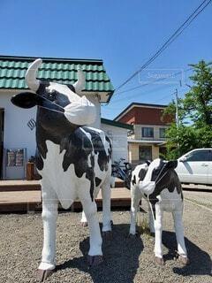 マスクをする牛のオブジェの写真・画像素材[3819441]