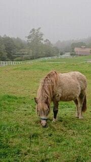 霧のまきばの馬の写真・画像素材[3943001]