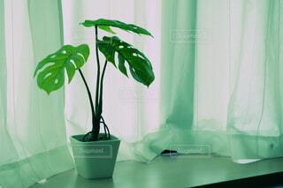 緑のカーテンとインテリアの写真・画像素材[3814170]