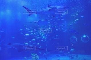 水族館の写真・画像素材[3814508]