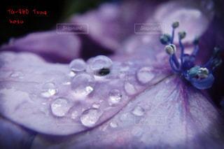 お花畑の写真・画像素材[160225]