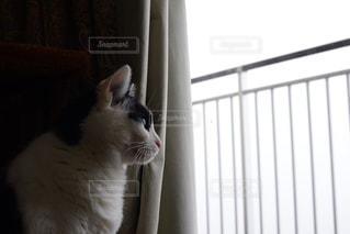 猫の写真・画像素材[170241]