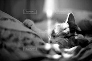 ベッドの上で横になっている猫の写真・画像素材[916557]