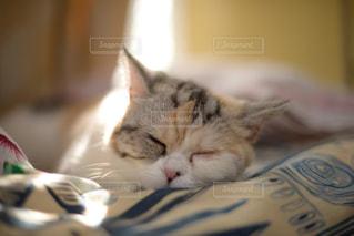 猫の寝顔の写真・画像素材[916559]