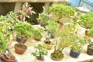 庭の盆栽の写真・画像素材[3820301]