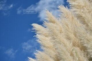 植物のクローズアップの写真・画像素材[3824661]