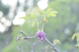 花のクローズアップの写真・画像素材[4253216]