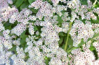 花のクローズアップの写真・画像素材[4253215]