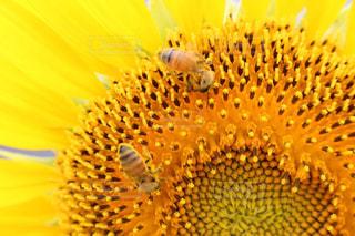 近くの花のアップの写真・画像素材[719721]