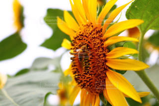 近くに黄色い花のアップの写真・画像素材[719723]