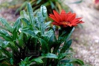 植物の上のピンクの花の写真・画像素材[3891174]