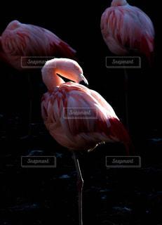 動物の写真・画像素材[304990]