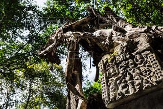 木の隣に立っているキリンの写真・画像素材[1036722]