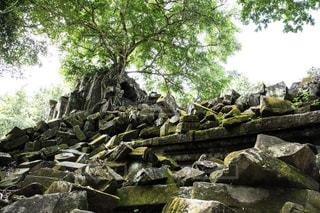 岩の壁の横にあるツリーの写真・画像素材[1036724]