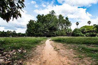 木の隣に土の道の写真・画像素材[1036738]