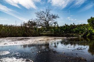 水の体の横に立っている人の写真・画像素材[1036746]