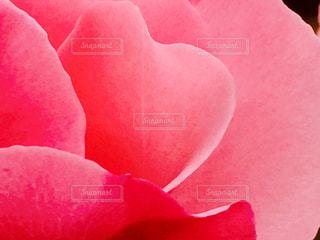 花の写真・画像素材[253986]