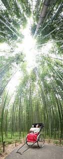 京都の竹藪の写真・画像素材[3827458]