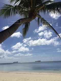 ヤシの木とビーチの写真・画像素材[3829562]