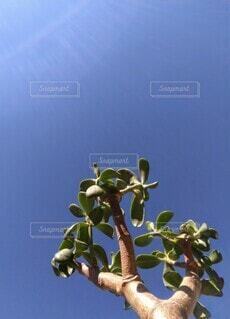 青い空と観葉植物の写真・画像素材[3912684]