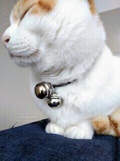 鈴の首輪を付けた猫の横顔の写真・画像素材[3931915]
