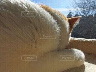 くつろぐ愛猫の写真・画像素材[4001854]