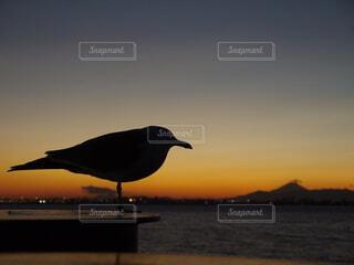 ウミネコと遠くに富士山の写真・画像素材[4125788]
