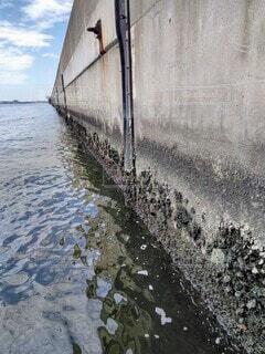 干潮の防波堤の写真・画像素材[4323916]