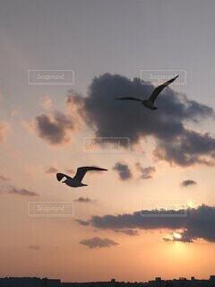 夕焼けと鳥のシルエットの写真・画像素材[4332187]